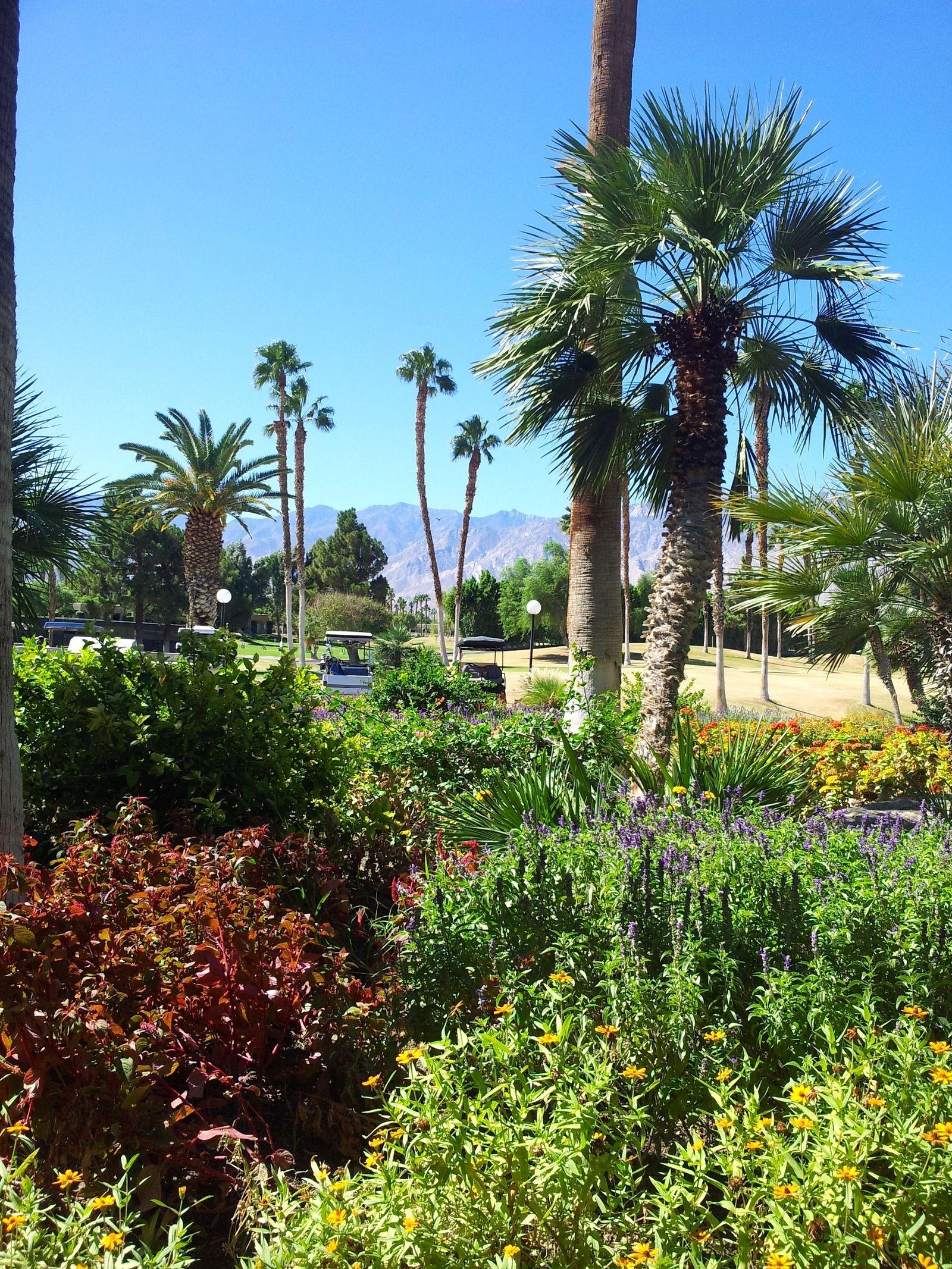 tennis-tourist-desert-princess-golf-course-and-mountains-palm-springs-teri-church