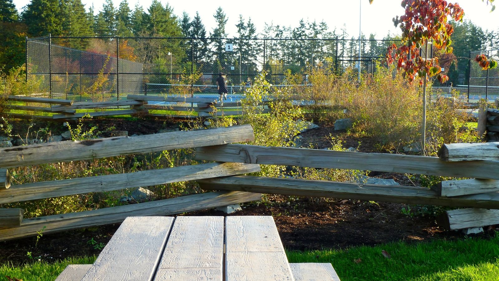 tennis-tourist--centennial-tennis-courts-central-saanich-vancouver-island-picnic-table-and-fence-teri-church