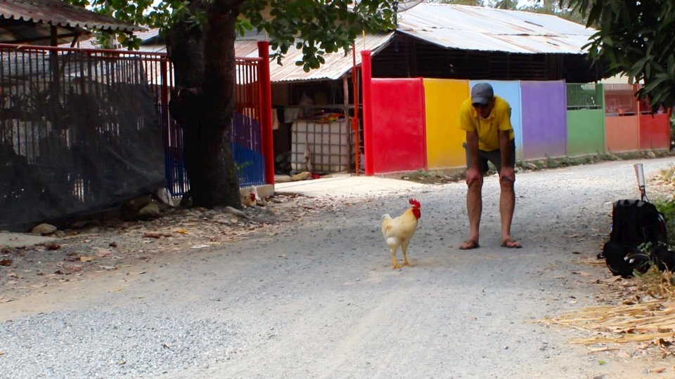 tennis-tourist-koh-chang-tennis-chicken-still-frame-teri-church