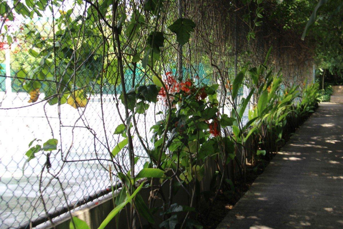 tennis-tourist-furama-hotel-tennis-court-fence-flowers-teri-church